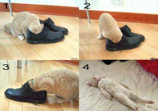 Причина запаха от обуви кроется в обуви, колготках или грибке