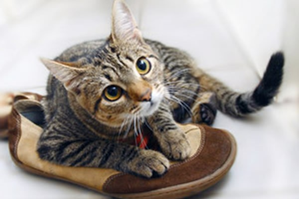 Коты не любят запах цитрусовых